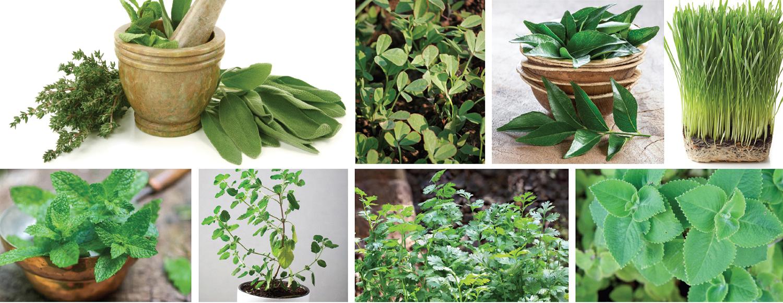 Herbal-highHOME